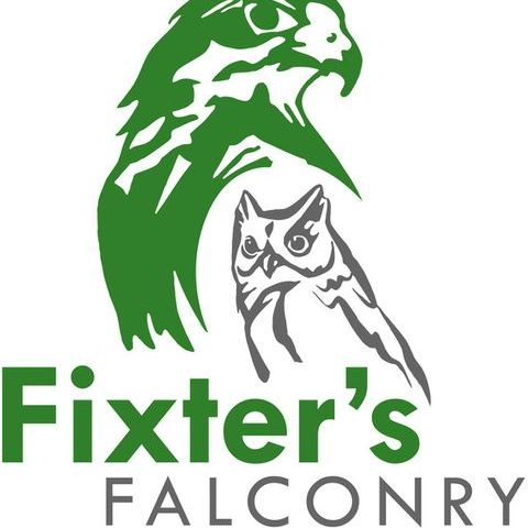 Fixter's Falconry Children Entertainment