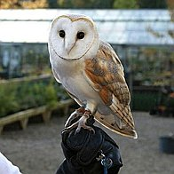 Durham Falconry Games and Activities