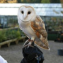 Durham Falconry Children Entertainment