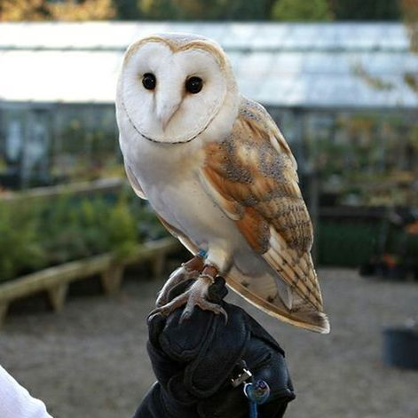 Durham Falconry - Children Entertainment , Newcastle Upon Tyne, Games and Activities , Newcastle Upon Tyne,