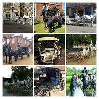 Snailriver Carriage Horses Transport