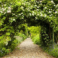 Secret Garden for hire